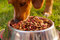 Closeup mixed breed dog eating from metal bowl with fresh crunchy food sitting on green grass, animal nutrition concept