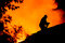 Silhouette of firemen on the roof of a burning house