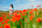 Girl walks in the poppy field