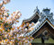 Detail on Japanese temple roof against blue sky during cherry blossom season