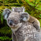 Australian koala bear native animal with baby and Happy Australia Day greeting