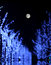 Tree lights under the moon
