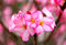 Photo of bright pink spring flowers