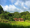 Small house in rice fields. Idyllic summer landscape with green field and forest under blue sky