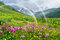Summer landscape with a rainbow and mountain flowers