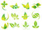 Vector green leaves, flowers, ecology icons, health, environment, nature related logos