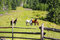 Curious horses on the green hill, beautiful horses scene grazing