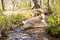 Playful dog jumping over creek