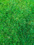 Top View green grass at soccer pitch or football  field