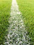 White line on green grass at soccer pitch or football  field