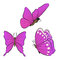 Flying butterfly with purple wings. Collection of beautiful insects.
