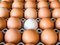 Close-up view of raw chicken. Every egg is a yellow egg, with the exception of white duck eggs.