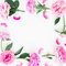 Frame made of pink peony flowers, leaves and petals with space for text on white background. Flat lay, top view. Peony flower text