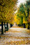 Schoenbrunn empty park alley with autumn trees transforming into