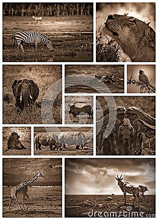 非洲徒步旅行队黑白拼贴画上色与乌贼属