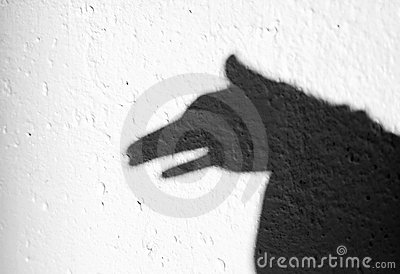 动物和它的影子图片
