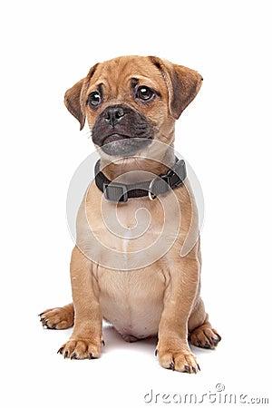 逗人喜爱的狗杂种动物小狗