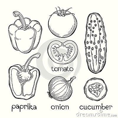 葱,黄瓜 在白色b的传染媒介例证