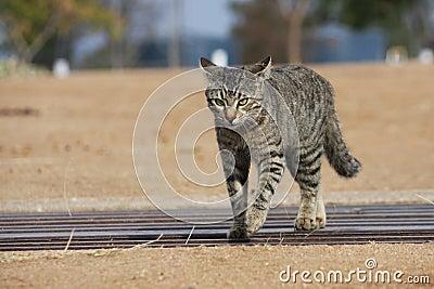 ¡Gato del gatito en el vagabundeo!