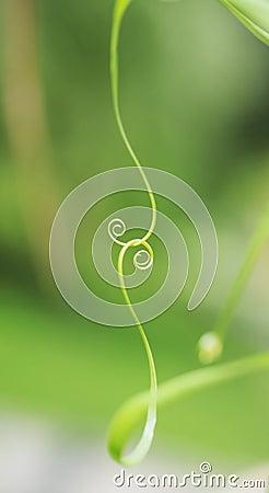 螺旋叶子图片