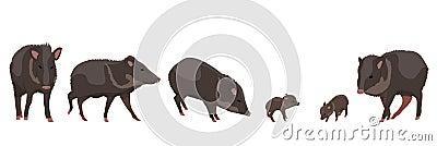 Set wild animals Peccary. Animals of Amazonia Vector Illustration