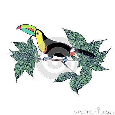 Toucan standing on the tree Cartoon Illustration