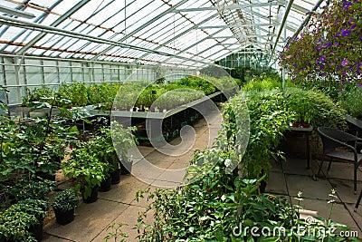 l 39 int rieur d 39 une serre chaude compl tement des plantes