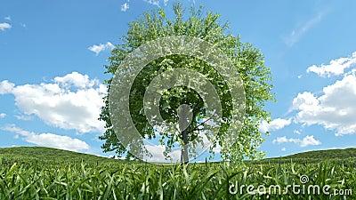 Árbol creciente almacen de metraje de vídeo
