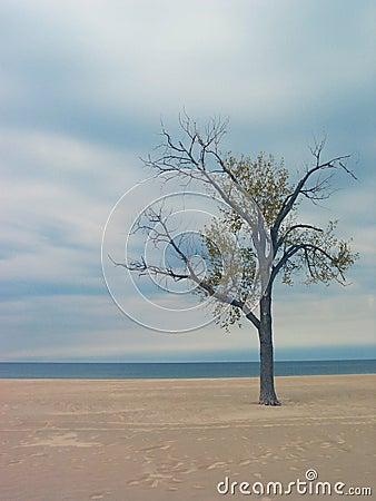 Árbol de la playa de Holanda