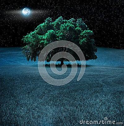 Árbol de roble en la noche