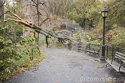 Árbol derribado por Hurricane Sandy, Manhattan Fotografía editorial