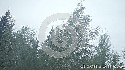 Árbol durante el viento pesado metrajes