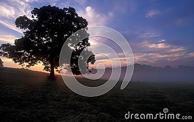Árbol en la salida del sol