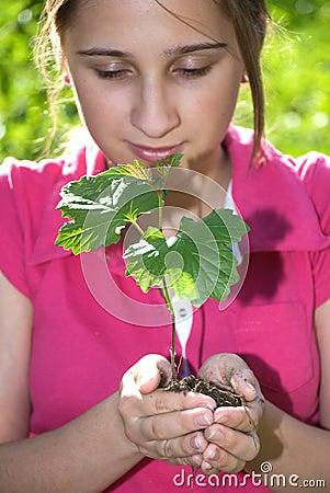 Árbol en manos