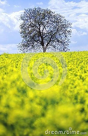Árbol en un campo de flores