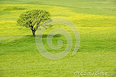 Árbol en un prado del flor del resorte