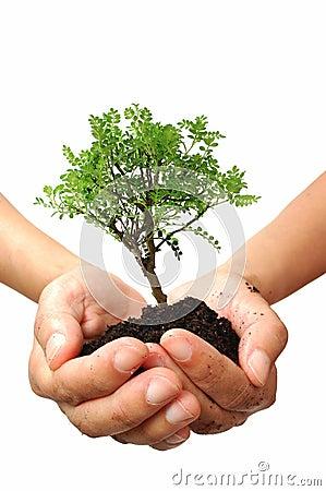 Árbol en una mano