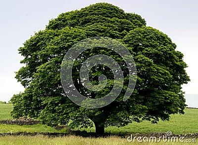 Árbol perfecto