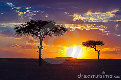 Árbol solitario dos en un fondo de la puesta del sol tropical