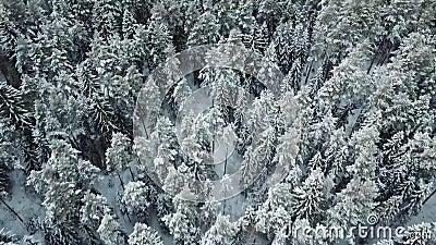 Árboles blancos del invierno en bosque almacen de video