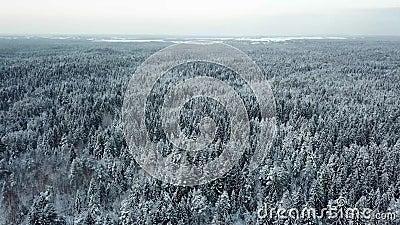 Árboles blancos hermosos del invierno en bosque metrajes