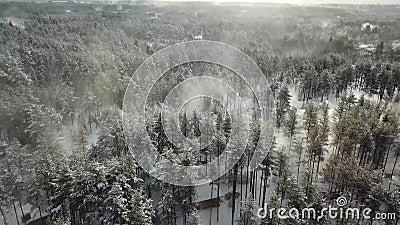 Árboles blancos ventosos del invierno en bosque almacen de metraje de vídeo