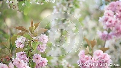 Árboles de la primavera metrajes