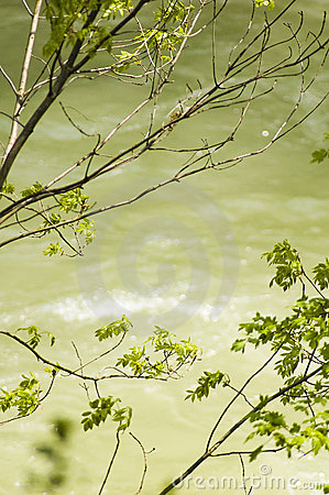 Árboles sobre el río de Cerna