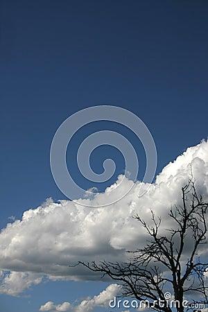 Árvore abstrata