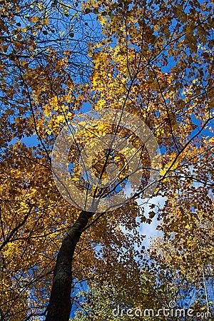 Árvore bonita