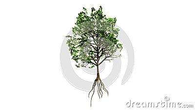 Árvore crescente (versão da cor)