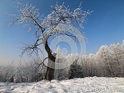 A árvore de cereja