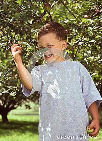 Árvore do rapaz pequeno e de maçã