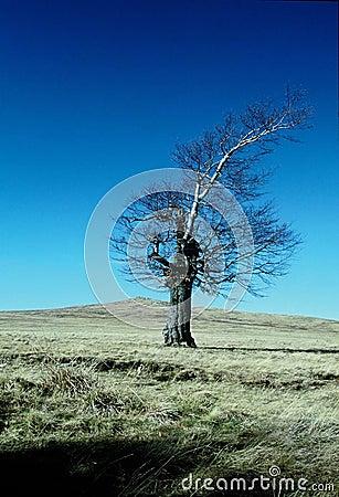 Árvore e montanha